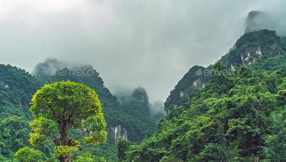 Blooming green tree among Zhanjiajie mountain scenery - Stock Photo - Images