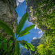 Large tropical plants growing in Wulong National Park - PhotoDune Item for Sale