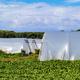 Cultivation Foils - PhotoDune Item for Sale