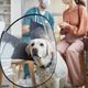 Dog Wearing Protective Collar at Vet Clinic - PhotoDune Item for Sale