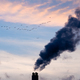 Industrial pollution chimneys and wildlife concept - PhotoDune Item for Sale