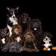 eight dogs on black background - PhotoDune Item for Sale
