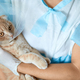 Female veterinarian doctor is holding on her hands a cat with plastic cone collar - PhotoDune Item for Sale