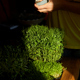Woman spraying microgreen with water at wooden table, hard light - PhotoDune Item for Sale