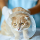 Veterinarian doctor is making a check up of a cute beautiful cat with plastic cone collar - PhotoDune Item for Sale