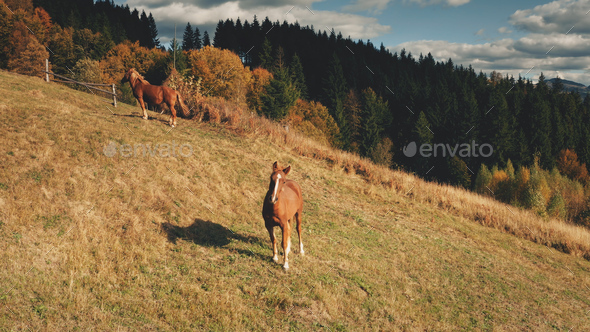 Rural mountain with farm animals aerial. Autumn nature landscape. Horses at countryside. Farmlands - Stock Photo - Images