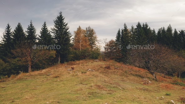 Autumn landscape at mountain forest aerial. Environment at mount nature beauty. Pine fir, leafy tree - Stock Photo - Images