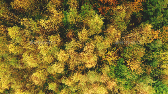 Top down aerial sun colorful mountain forest at hill. Nobody nature landscape at autumn sunny day - Stock Photo - Images