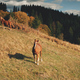 Rural mountain with farm animals aerial. Autumn nature landscape. Horses at countryside. Farmlands - PhotoDune Item for Sale