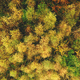 Top down aerial sun colorful mountain forest at hill. Nobody nature landscape at autumn sunny day - PhotoDune Item for Sale