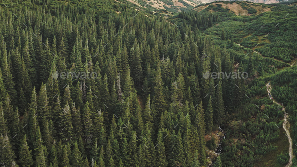 Aerial nobody nature landscape. Hike path at mountain forest on hill. Pine tree at green grass range - Stock Photo - Images