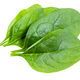 few fresh green leaves of Spinach isolated - PhotoDune Item for Sale