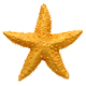 Yellow starfish souvenir, handmade decoration - PhotoDune Item for Sale