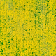 Aerial View. Agricultural Landscape With Flowering Blooming Rapeseed, Oilseed In Field Meadow In - PhotoDune Item for Sale