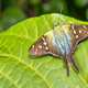 Tropical Butterfly, Tropical Rainforest, Costa Rica - PhotoDune Item for Sale
