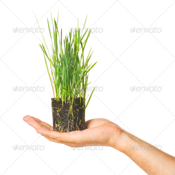 Human hand holding green grass - Stock Photo - Images