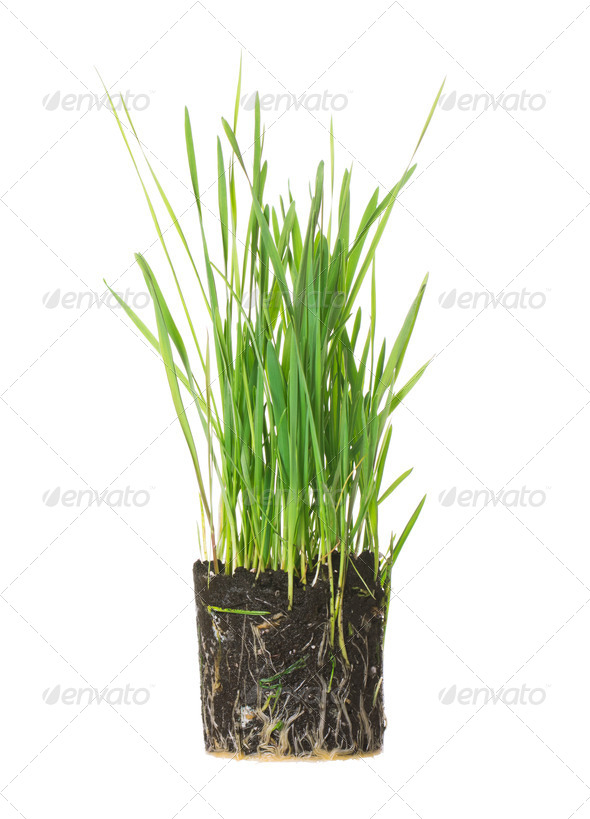 Green grass on white - Stock Photo - Images