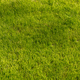 Green grass texture background Top view - PhotoDune Item for Sale