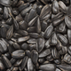 Heap of black sunflower seeds background texture - PhotoDune Item for Sale