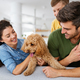 Portrait of happy family with a dog having fun together at home - PhotoDune Item for Sale