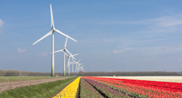 Tulips and Windturbines