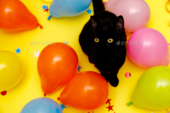Black cat in a birthday confetti and balloons on yellow background Stock  Photo by Sepaolina