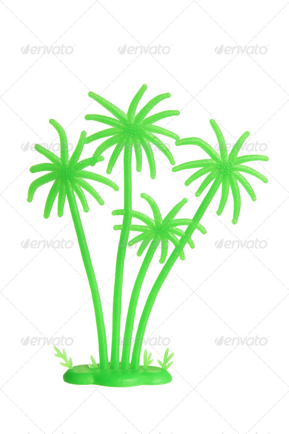 Miniature Palm Tree - Stock Photo - Images