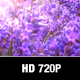 Lavender Field Close Up - VideoHive Item for Sale