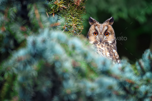 Owl sit in a tree and looking on the the camera - Stock Photo - Images