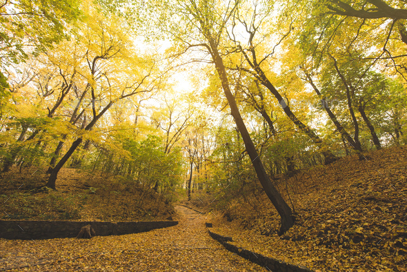road going down hill in beautiful autumn park - Stock Photo - Images