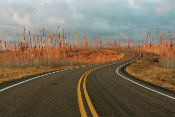 Road in sunset - Stock Photo - Images