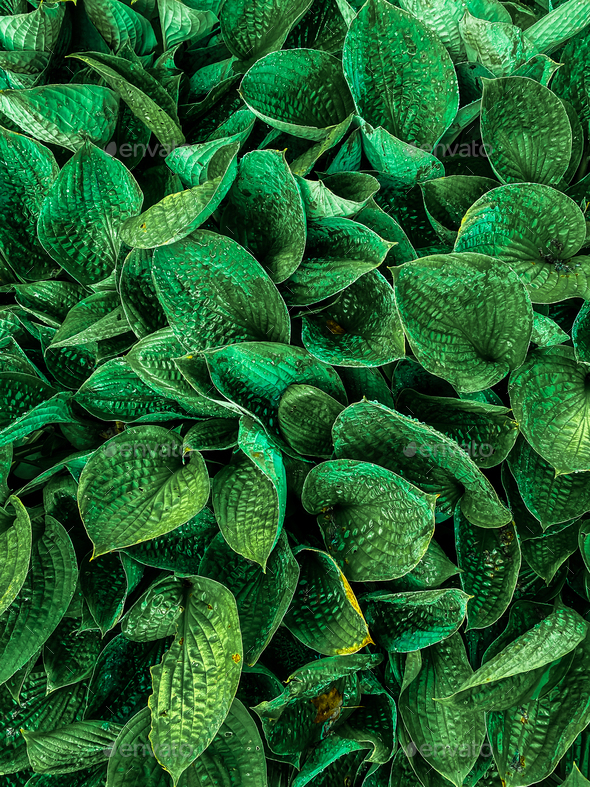 Green plant leaves background, top view. Nature - Stock Photo - Images