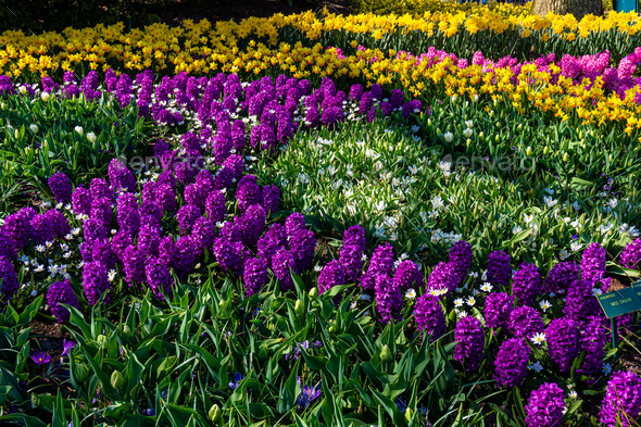 Colorful garden landscape and grassy lawn - Stock Photo - Images