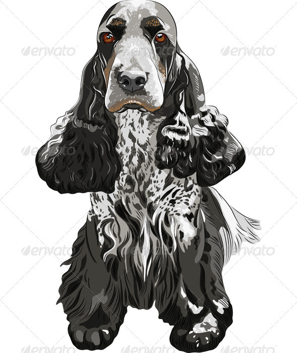 Vector gun dog English Cocker Spaniels sitting - Animals Characters