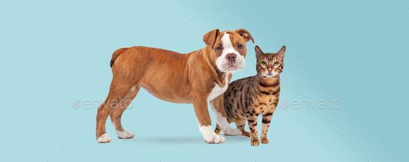 dog cat - Stock Photo - Images