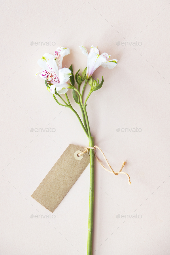 Label on a flower - Stock Photo - Images
