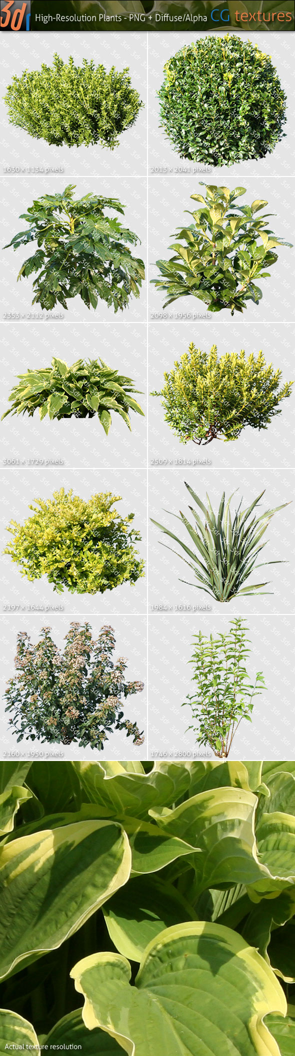 Plants Textures Hi-Res Collection 01 - 3DOcean Item for Sale