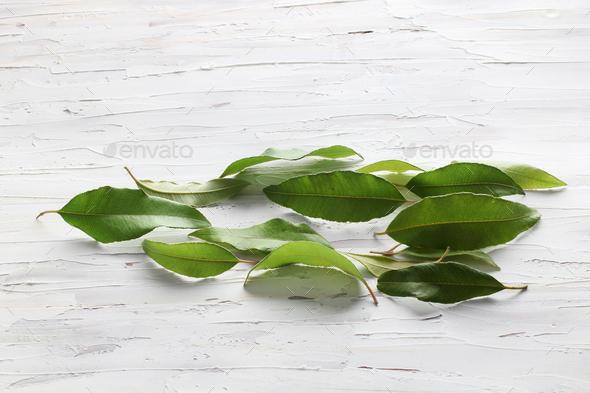 Lemon Myrtle Leaves - Stock Photo - Images