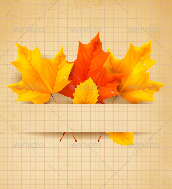 Colorful autumn leaves on a old paper   - Flowers & Plants Nature