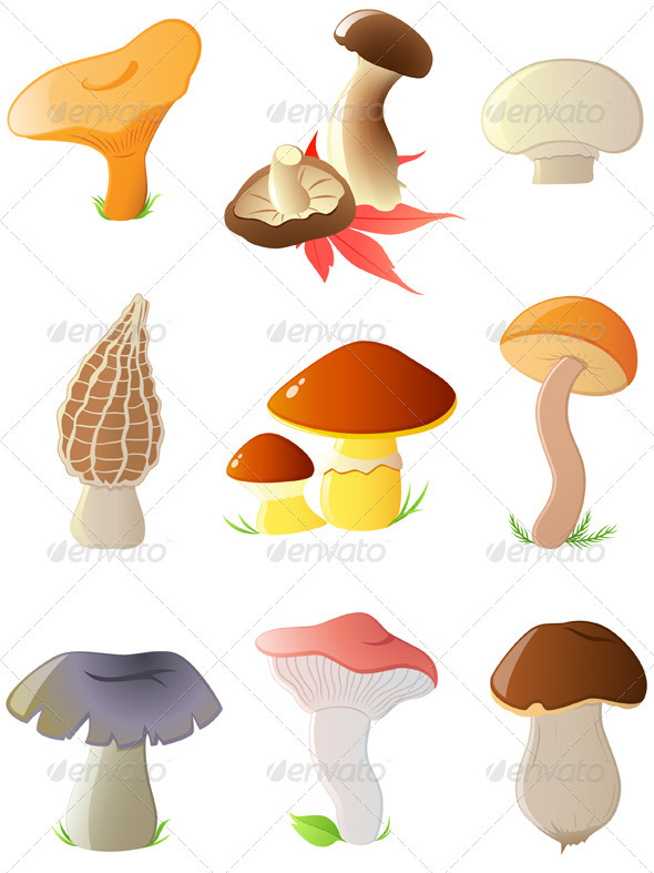 Glossy Forest Mushrooms - Flowers & Plants Nature