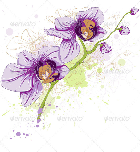 Floral Background with Orchids - Flowers & Plants Nature