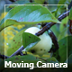 Moving Camera In A Garden - VideoHive Item for Sale