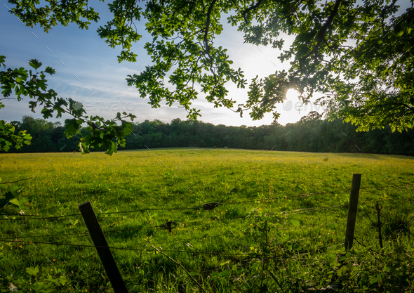 Meadow In Summer - Stock Photo - Images