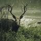 Deer in the woods - PhotoDune Item for Sale