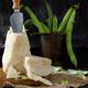 Pecorino cheese and broad beans - PhotoDune Item for Sale