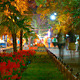 People Stroll Along The Boulevard At Night - VideoHive Item for Sale