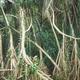 Rain forest - PhotoDune Item for Sale