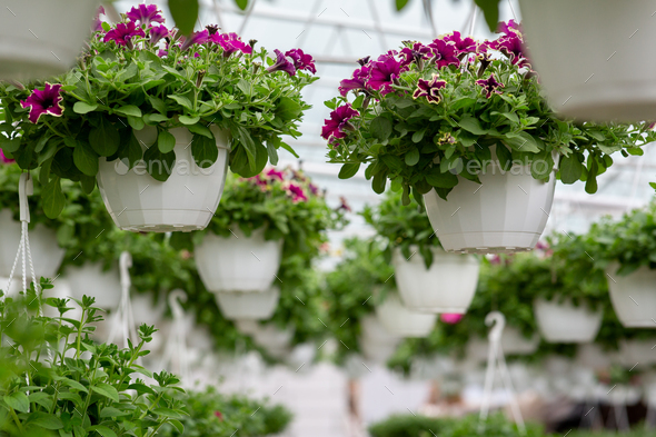 Decorative plants for garden, park and home, business in city - Stock Photo - Images