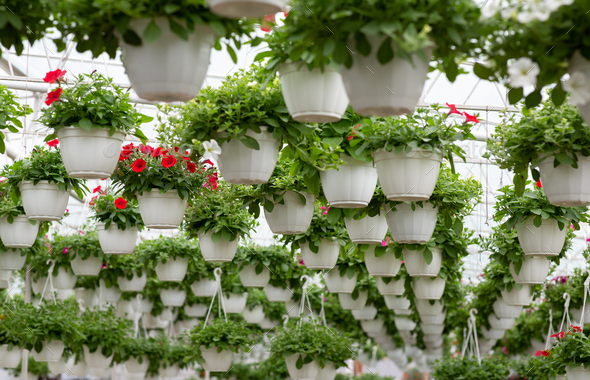 Smart greenhouse, modern business and cultivation of decorative plants - Stock Photo - Images
