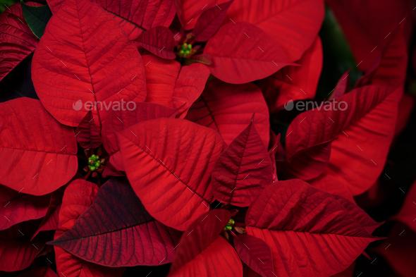 floristeria parera - Stock Photo - Images